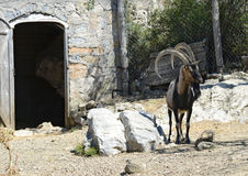 Free Goat Island Crete Stock Photography - 32943052