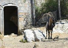 Goat island Crete Stock Photography