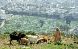 Goat keaper. Goat keeper in Tetouan, Morocco Royalty Free Stock Photography