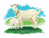Goat with kid on a meadow. Royalty Free Stock Image
