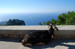 Goat lying with the panoramic view on the sea. Goat lying with the panoramic view of Monolitos Castle, Rhodes Island, Greece stock photos