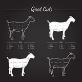 Goat meat cuts scheme on blackboard. Scheme cuts of fresh goat - cuts elements on blackboard Royalty Free Stock Photos