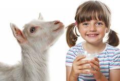 goat milk Stock Image