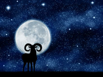 A goat in the night. Royalty Free Stock Images