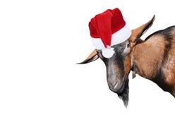 Free Goat Portrait Close Up Royalty Free Stock Image - 158053766