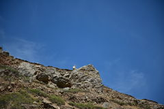 Goat on the rock. Rock climbing, danger, beautiful weather, blue sky, clouds, rock animals, white goat head against the sky, mountain vegetation green grass Stock Photo