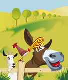 Goat, rooster and donkey on field Stock Images