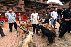 Goat sacrifice in Kathmandu, Nepal Royalty Free Stock Photo