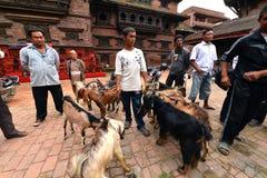 Goat sacrifice in Kathmandu, Nepal Royalty Free Stock Photo
