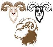 Goat. Set of stylized goats head. Goat - symbol of year 2015 Stock Photos
