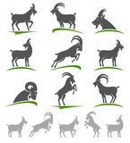 Goat set. Vector Royalty Free Stock Photo