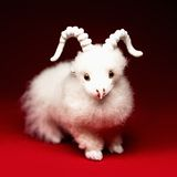 Goat or sheep the symbol 2015 year. White goat or sheep toy the Chinese symbol of 2015 year on red background royalty free stock images