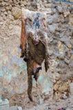 Goat skin hanging on rope Royalty Free Stock Image