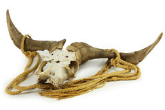 Goat Skull Stock Photo