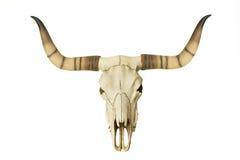 Goat Skull Royalty Free Stock Photography