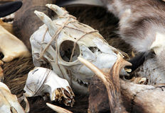 Goat skull at fair of artisans Stock Image