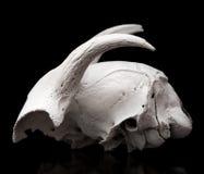 Goat skull Royalty Free Stock Images