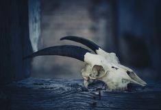 Goat skull on a night background, halloween from another world royalty free stock photos