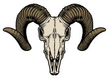 Goat Skull Vector Royalty Free Stock Images