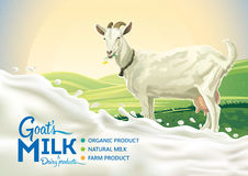 Goat and splash of milk. Rural landscape with goat and splash of milk as a design element Royalty Free Stock Photo