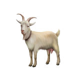 Goat standing up isolated on a white background Stock Photography