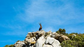 Goat statue in a mountain in marbella stock photo