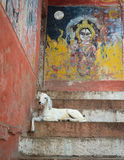 Goat on the steps of the Varanasi ghats, India Stock Photos