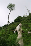 Goat Stretching for Food Royalty Free Stock Photography