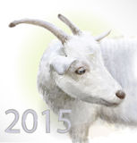 Goat is  the symbol of 2015 Royalty Free Stock Photo
