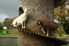 Goat Tower Stock Photography