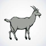Goat. Vector drawing Stock Photos