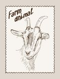 Goat vector hand drawn Royalty Free Stock Photo