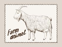 Goat vector hand drawn Royalty Free Stock Photography