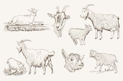 Goat vector hand drawn Stock Photography