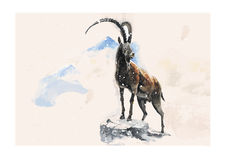 Goat. Vector illustration of the goat in winter made in watercolor technique Stock Images