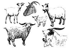 Goat vector illustrations Stock Image
