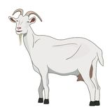 Goat vector. Vector goat isolated on white background. New year 2015 symbol Stock Photo