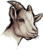 Goat. Vector goat on a white background Stock Images