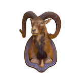 Goat on wall Stock Photo