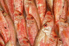 Goatfish. From Greece royalty free stock photo
