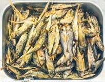 Goatfish fumé Image stock