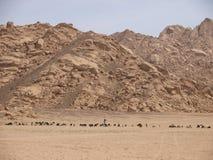 Goatherd com suas cabras no deserto Imagem de Stock