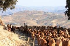 Goatherd con il suo gregge nelle montagne andaluse Immagini Stock Libere da Diritti