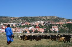 Goatherd in Morocco. Goatherd with his goats in Morocco Royalty Free Stock Photo