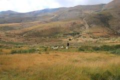 Goatherder dans les hautes montagnes du Liban images libres de droits