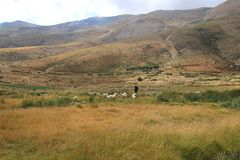Goatherder in the High Mountains of Lebanon royalty free stock images