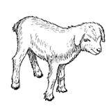 Goatling ilustración del vector