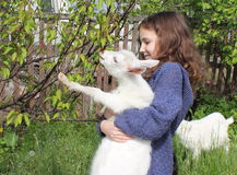 Goatling and a little girl Royalty Free Stock Image