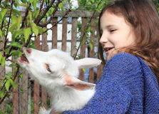 Goatling and a little girl Royalty Free Stock Images