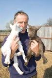 goatlings хуторянина Стоковые Изображения